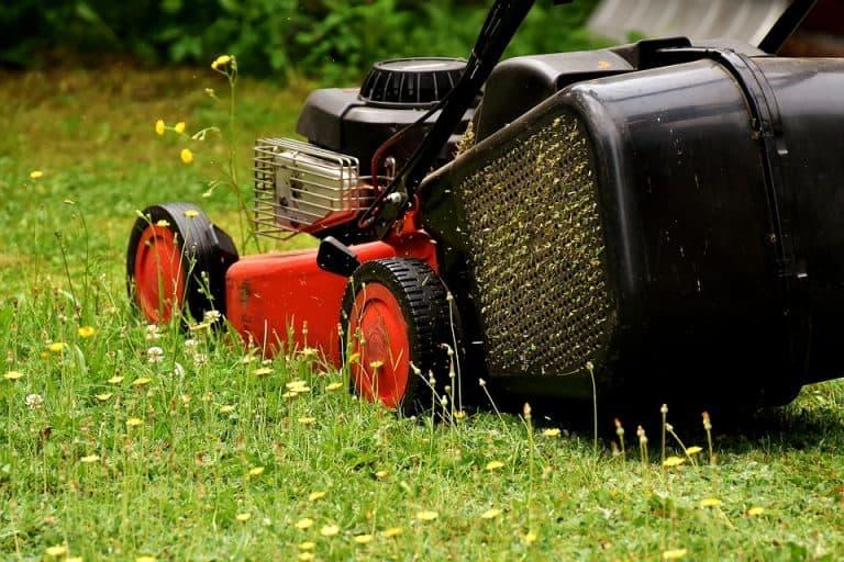dove buttare erba tagliata